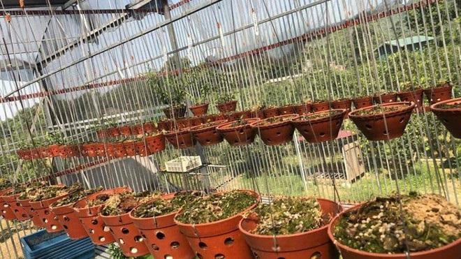 Điều tra vườn lan giá trị gần 3 tỷ bị mất trộm ở Hòa Bình